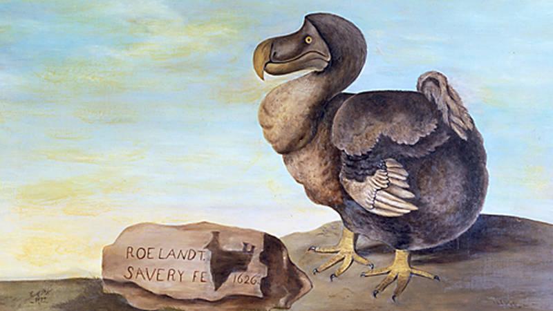 The Dodo c.1626