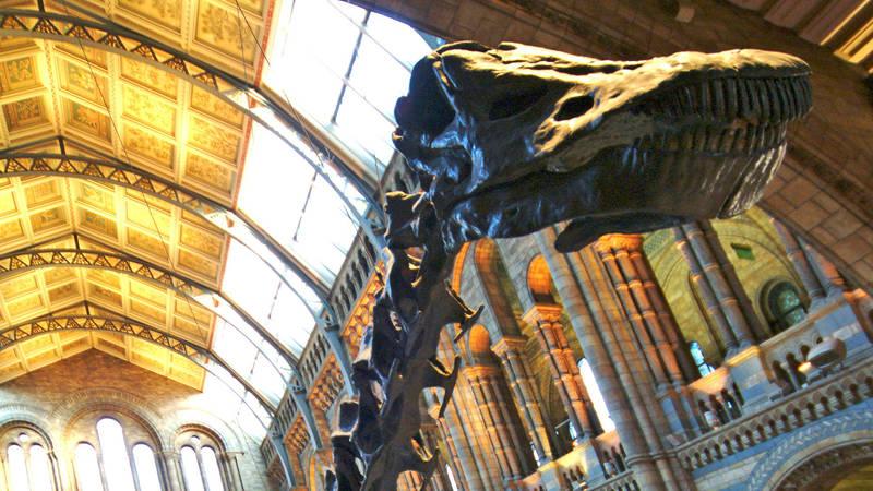 'Dippy' the Diplodocus