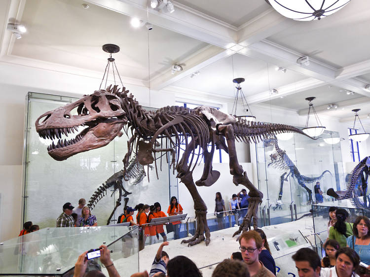Renegade Tour of the American Museum of Natural History