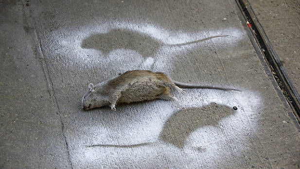 Rat complaints have soared in this Manhattan neighborhood