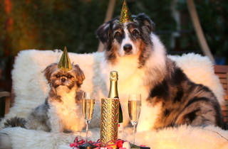 Two dogs celebrating at a party
