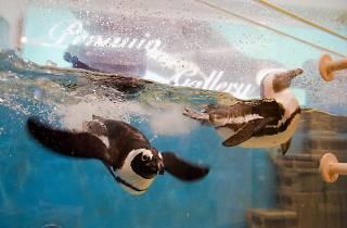 Penguin Bar