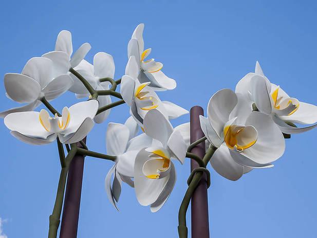 Isa Genzken, Two Orchids