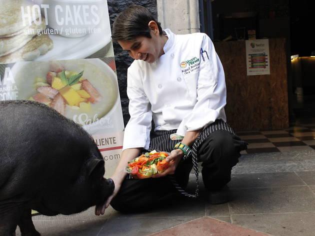 Recorrimos la Ciudad de México con La Chata Pig, el cerdo vietnamita más famosa de la Roma