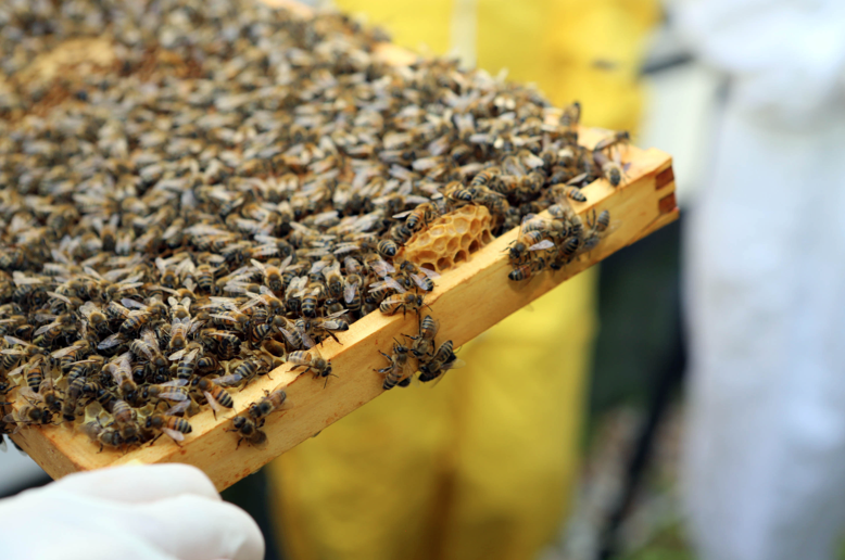 Urban Beekeeping Workshops