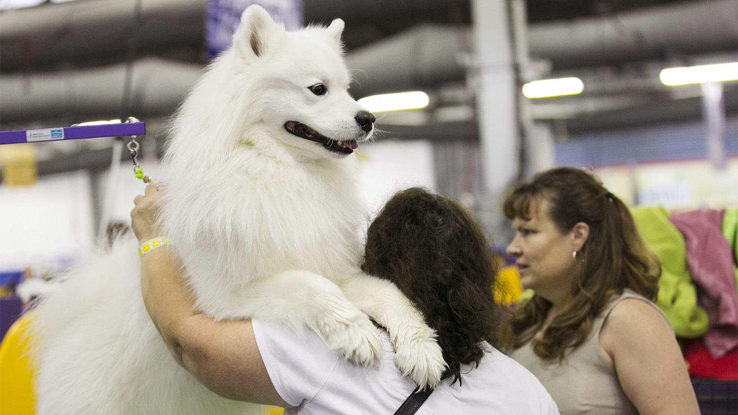 check out all the breeds with our westminster dog show