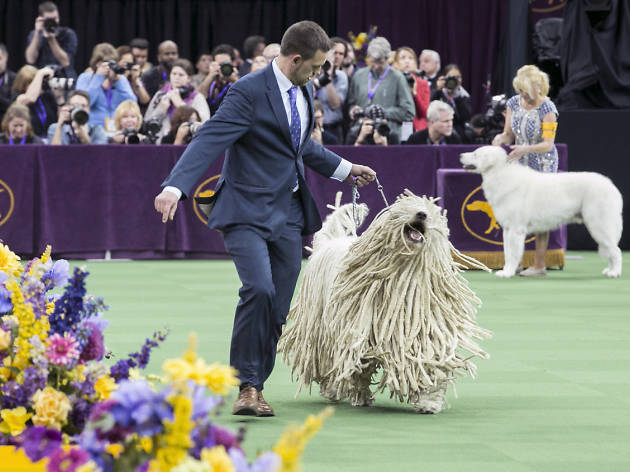 See adorable photos from the Westminster Dog Show 2016