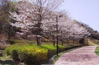 東京公園協会 土屋さまより/小滝