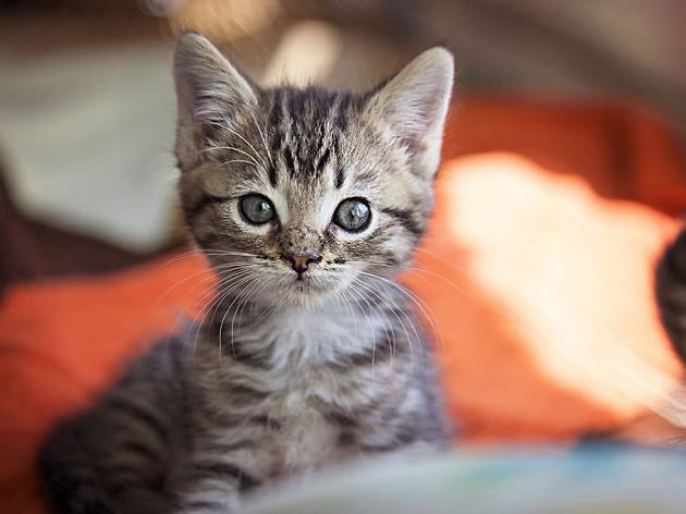 Help Best Friends Animal Society prepare for 2,900 kittens at this weekend's kitten shower