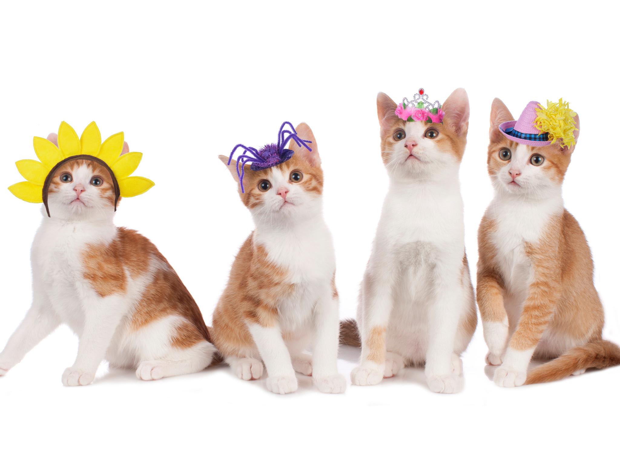 Guía para gatos en la CDMX