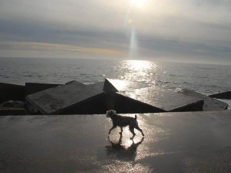 Passejar pel Front marítim