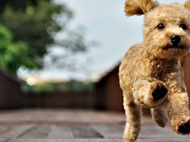 Foodtrucks, adopción de mascotas, convivencia con animales, estética canina y más en Foodtruck Station Aeropuerto