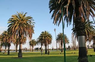 Tree in Albert Park