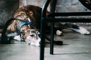 A dog sleeps under a stool