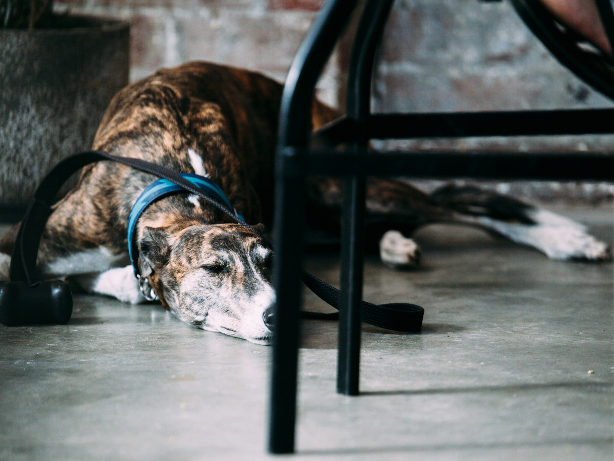 Dog-friendly cafés