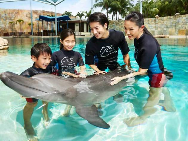 Morning with Dolphins