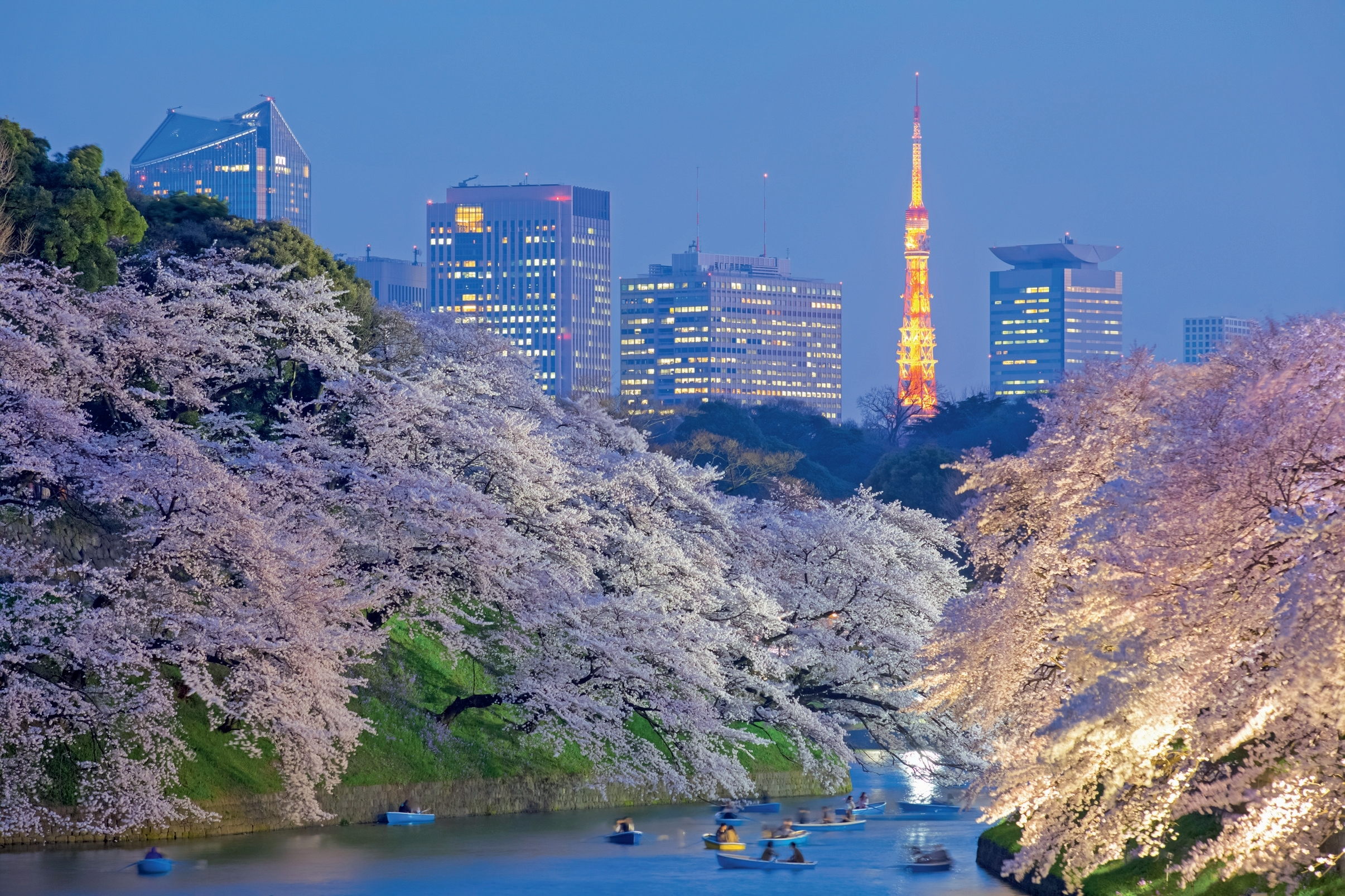 The Best Cherry Blossom Viewing Spots In Tokyo