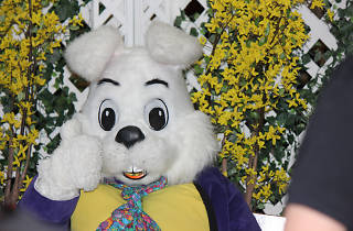 Photos with Bunny at North Riverside Park Mall