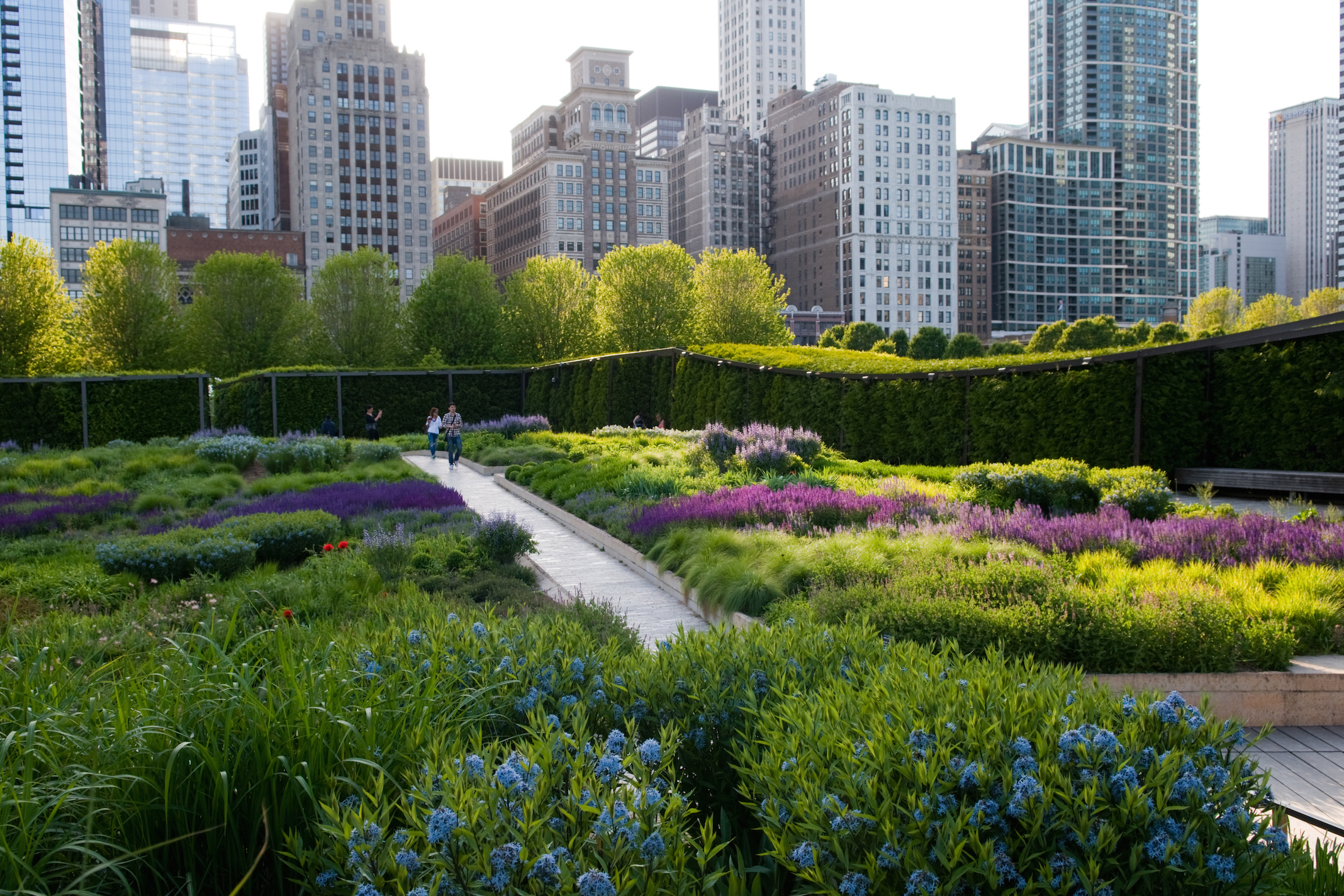 Where to see spring flowers in Chicago