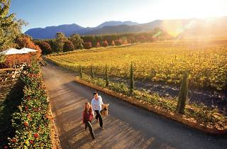 Boynton's Feathertop Winery in Porepunkah in the Victorian High Country