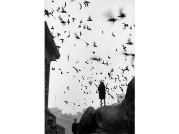 Sergio Best London photos: Sergio Larrain: 'Trafalgar square, London', 1958-1959. © Sergio Larrain/Magnum PhotosLarrain: 'Trafalgar square, London', 1958-1959. © Sergio Larrain/Magnum Photos