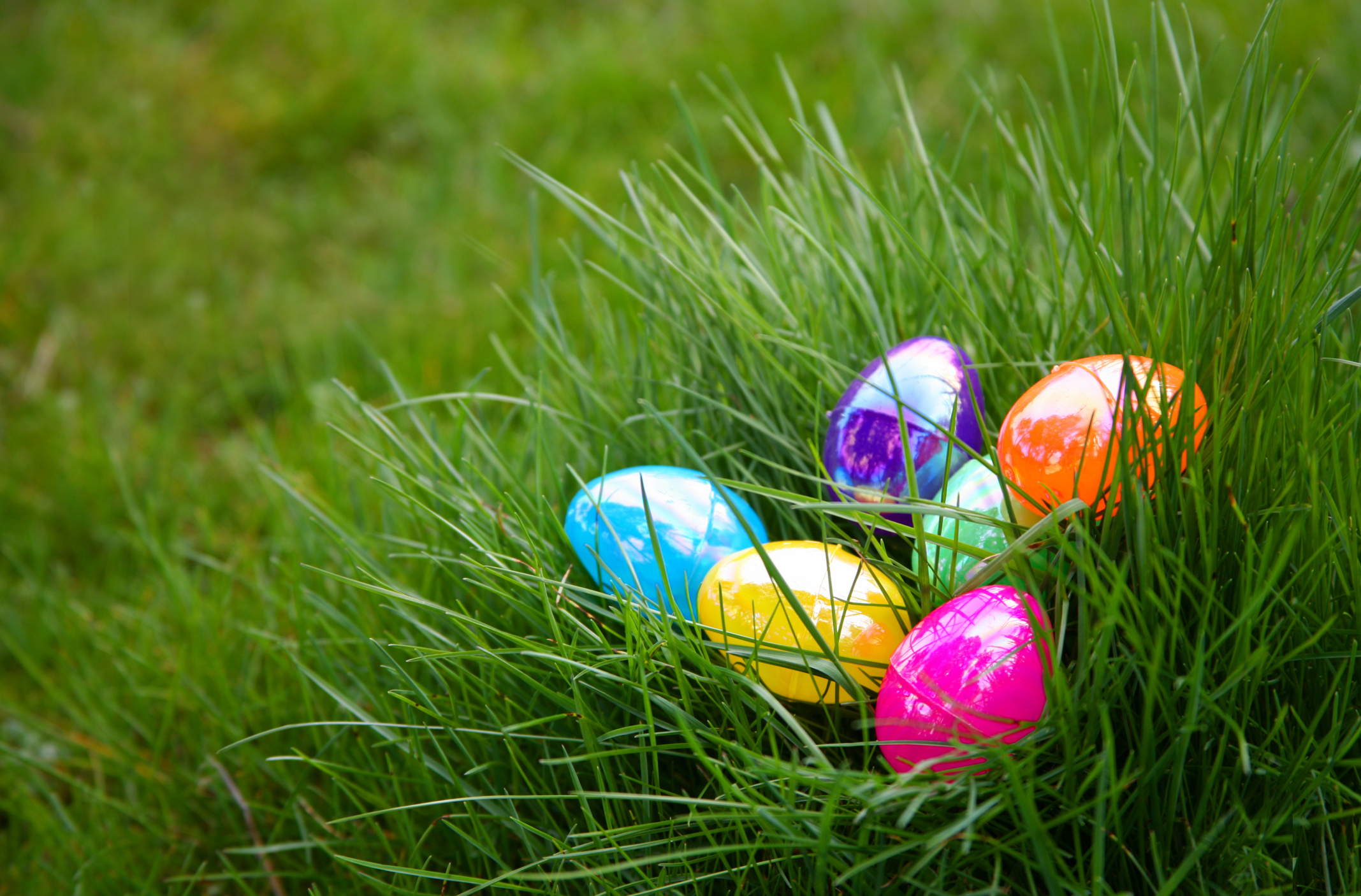 Where to go on an easter egg hunt in los angeles the bunny trail negle Images