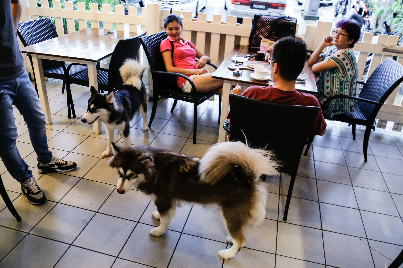 Pet-friendly restaurants in KL
