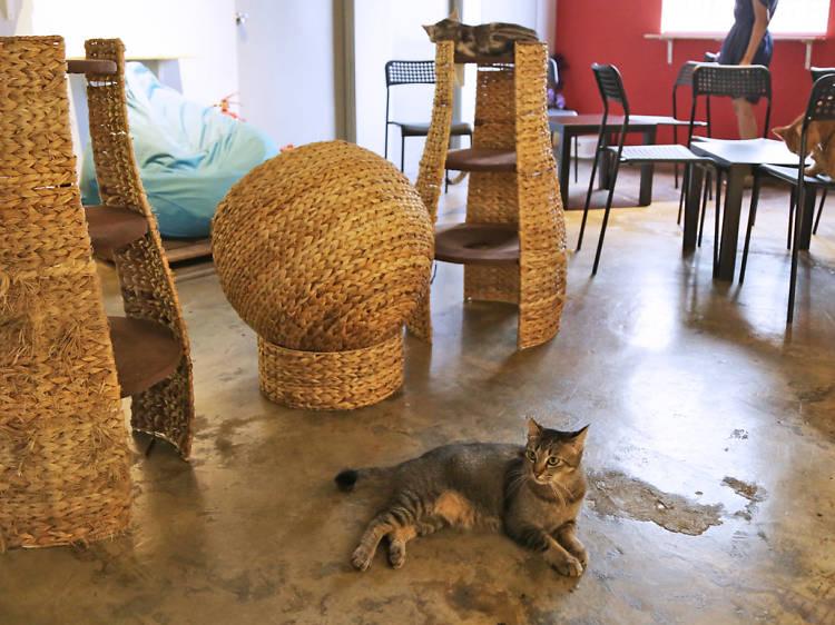 Pet cafés in KL