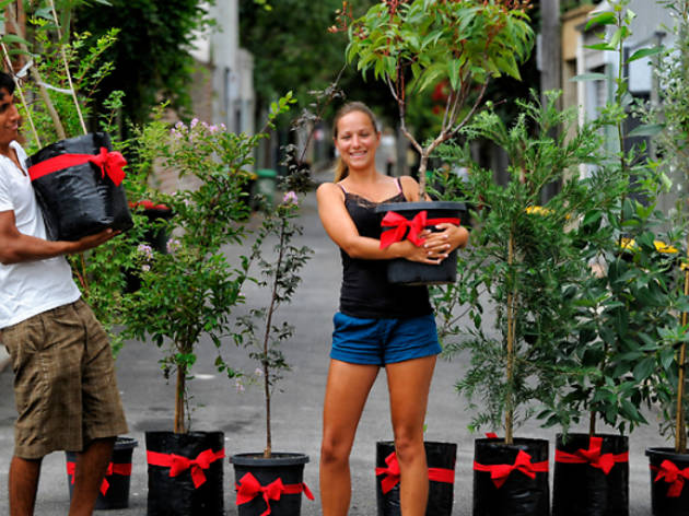 Free Trees from the City of Sydney