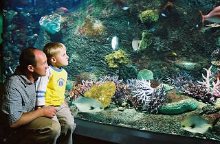 Ocean Rangers school holiday program at Sea Life Melbourne