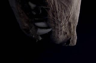 (Film still from 'The Eye That Articulates Belongs on Land' by Karen Kramer)