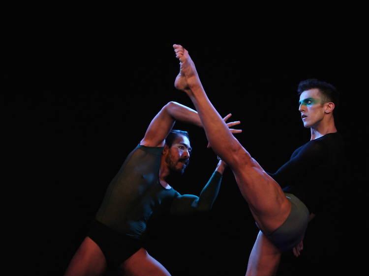 Convexus Ballet Contemporáneo