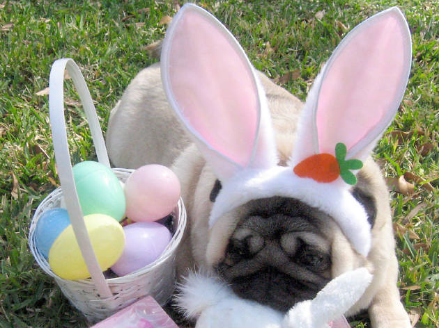 Yappy Hour Easter Egg Hunt for Dogs