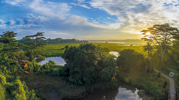Top five things to do in Kranji Marshes