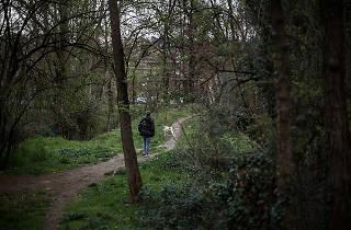 Bosc del Mas Abella