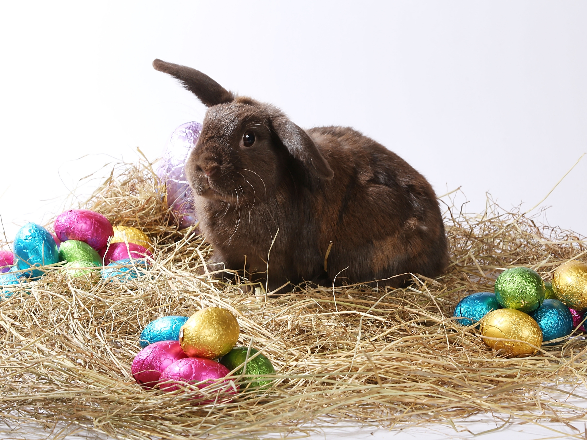Karl the rabbit with Easter eggs