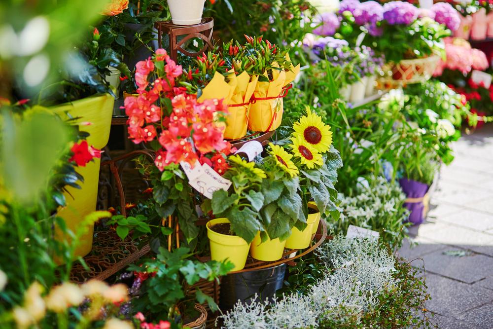 Mercat de les flors de la Rambla