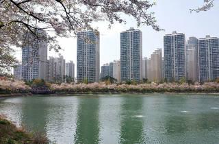 Seokchonhosu Lake Cherry Blossom Festival