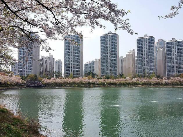 석촌호수 벚꽃축제