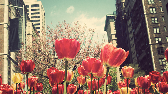The best Mother's Day events in NYC