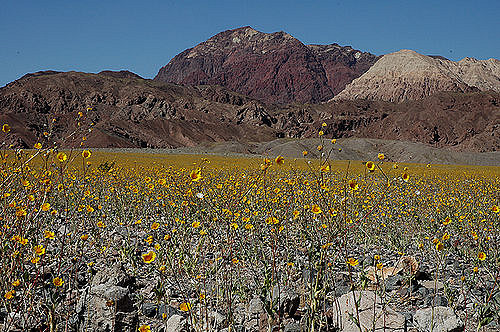Desert Valley wildflowers