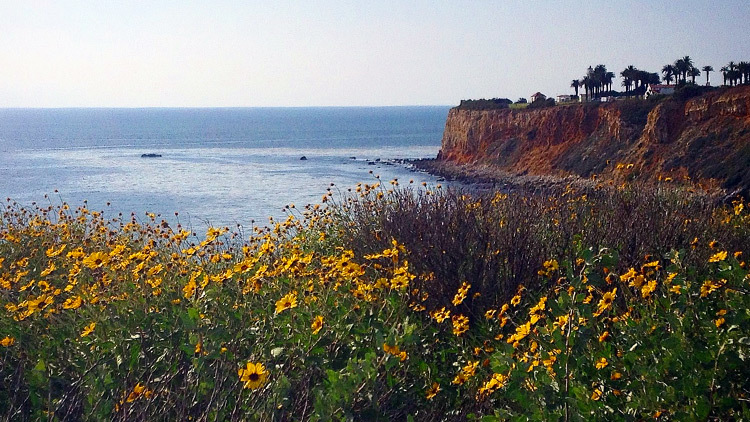 Where to see Southern California wildflowers