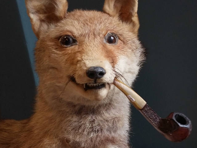 fox with pipe
