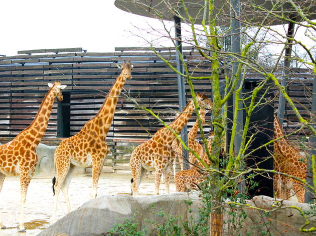 zoo vincennes