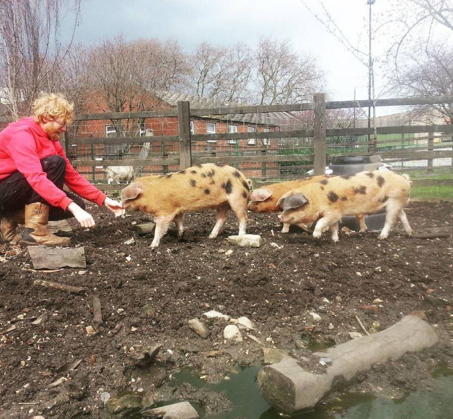 Piggies at Stepney City Farm