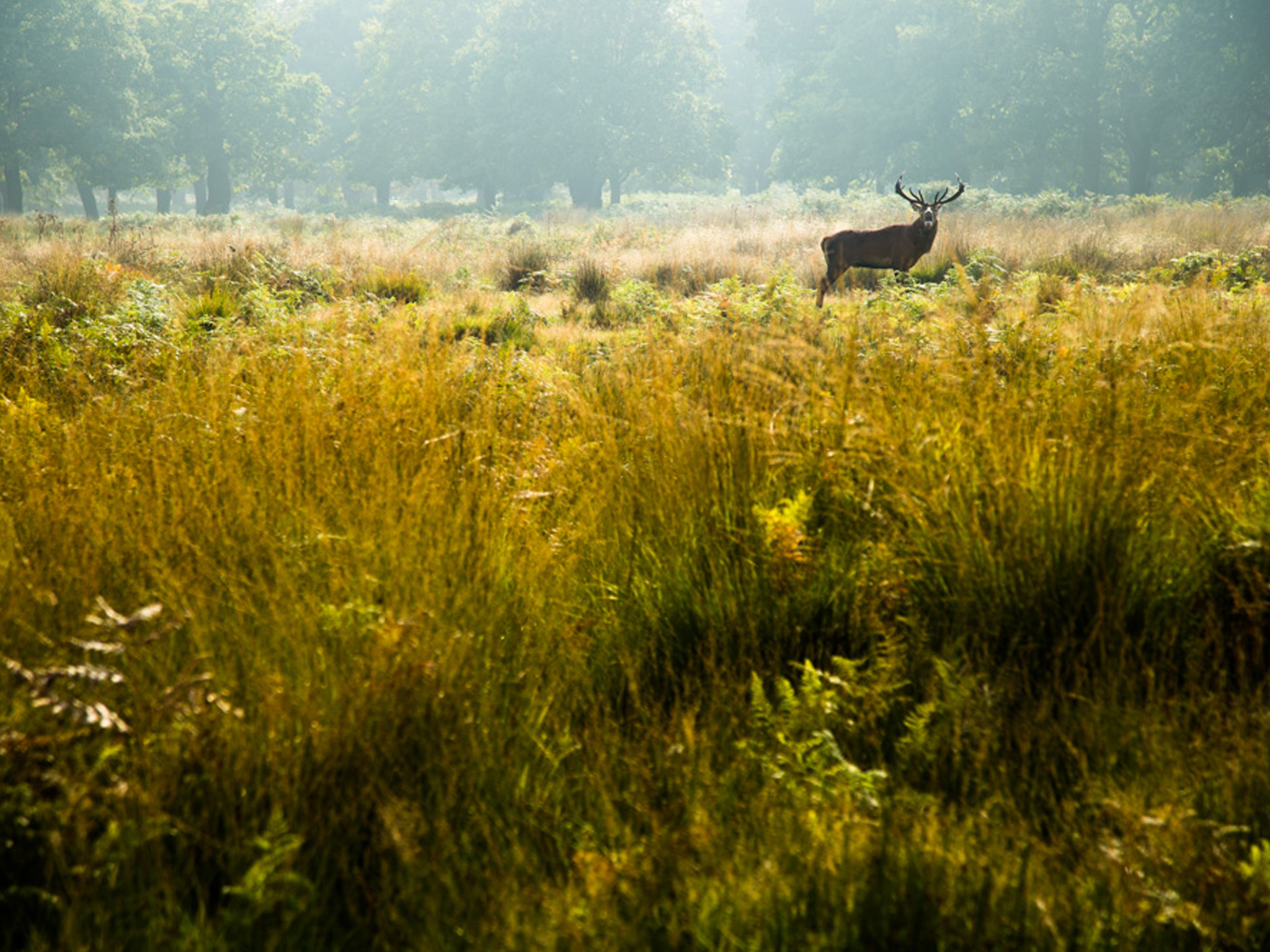 Readers' photo competition, runner up: Wild DEER