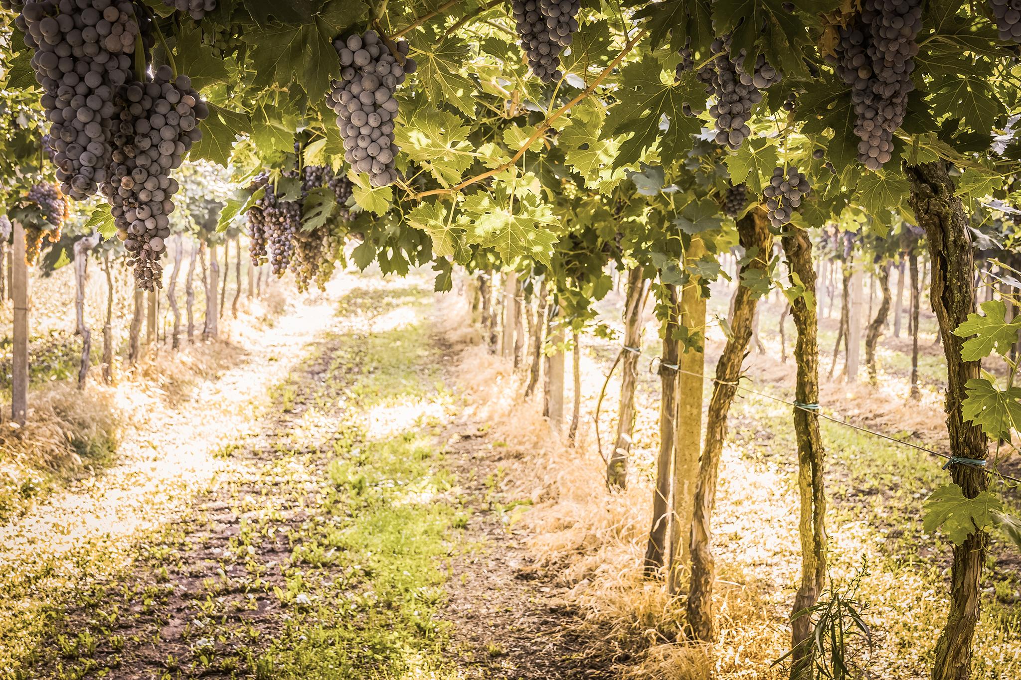 Heritage Winery