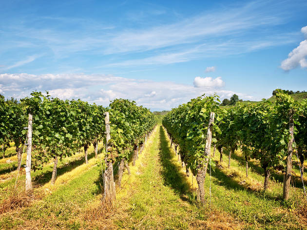 The best wineries in NJ