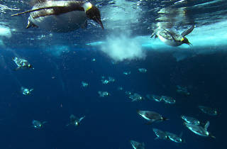 Milstein Science Series: Beneath the Ice