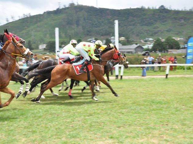 Cheer on at the horse races in Nuwara Eliya